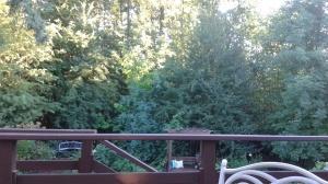 Backyard observations