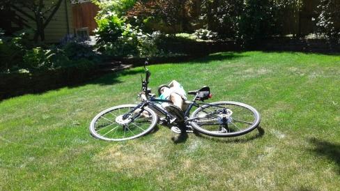 Bike fall.jpg